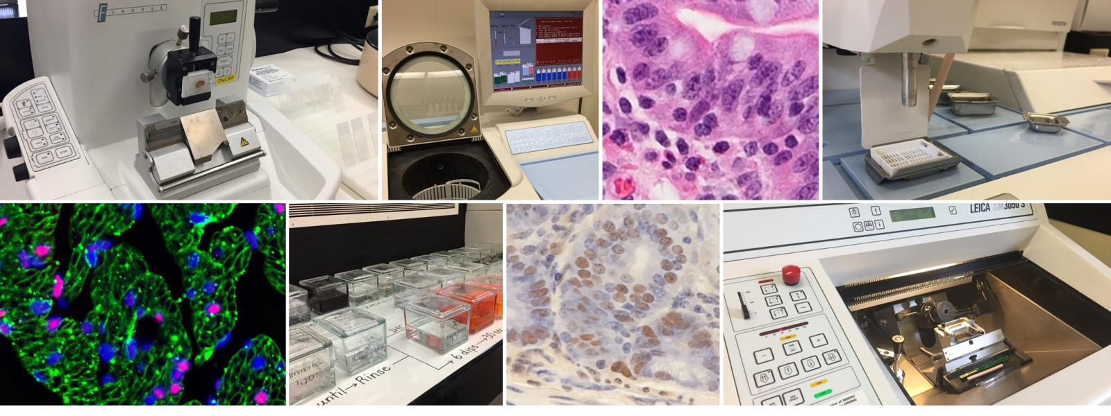 https://ovc.uoguelph.ca/biomedical-sciences/