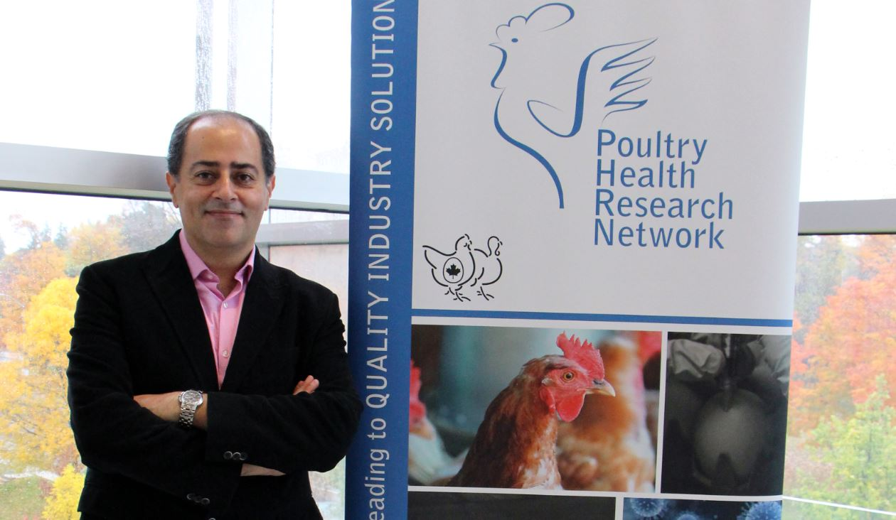 University of Guelph professor Shayan Sharif researches poultry immunology at the Ontario Veterinary College