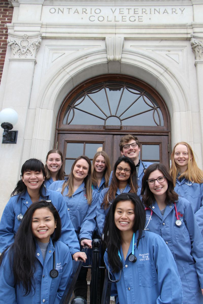 Photo of 2018 OVC Externship Blog Project students