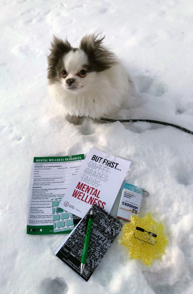 Dog in snow with OVC THRIVE Club kit materials