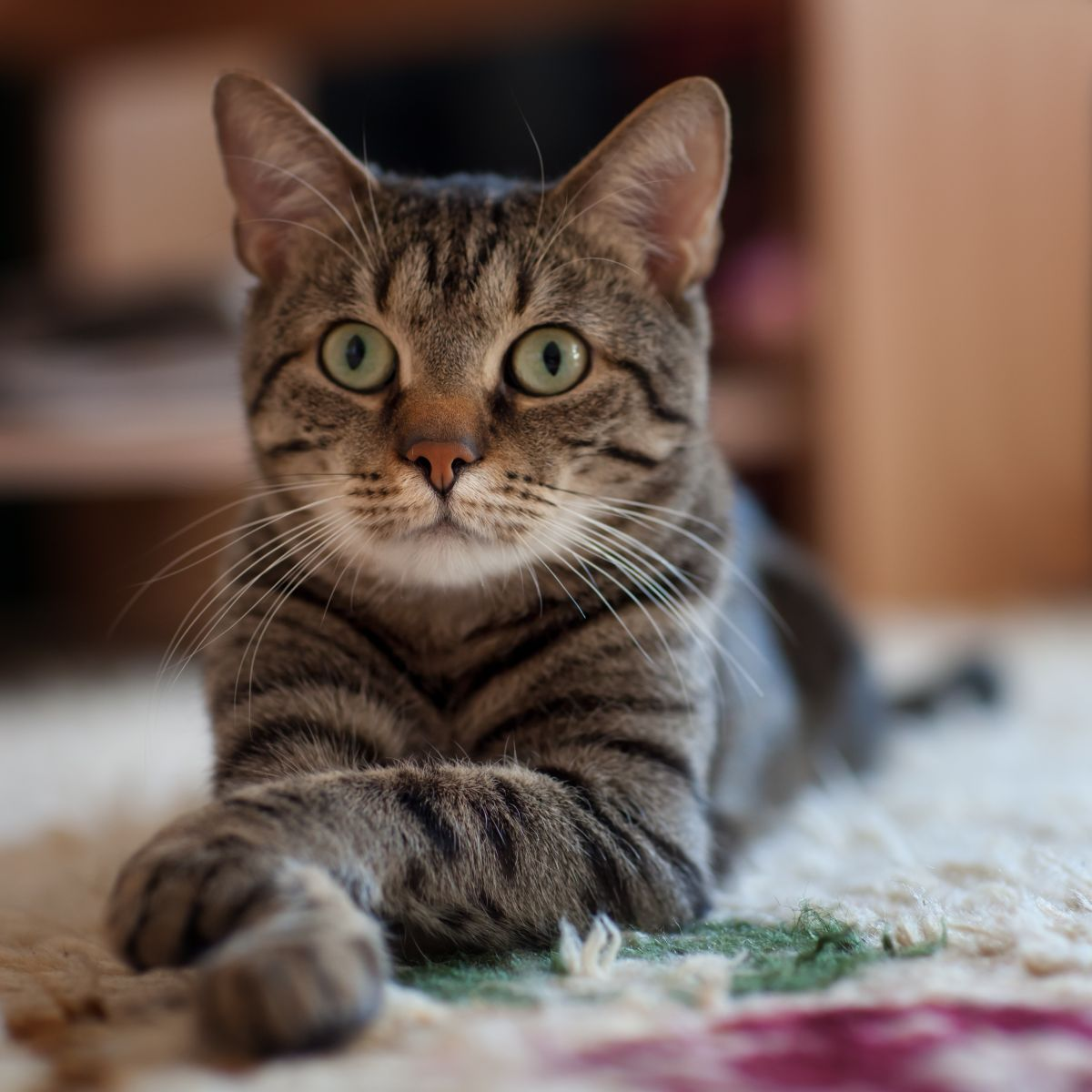 there are an estimated 200 million pet cats worldwide, with more pet cats than pet dogs. Cats live in about 38 per cent of Canadian households, 25.4 per cent of American households and 25 per cent of European households. Cats also seem to be a great source of entertainment. There are
