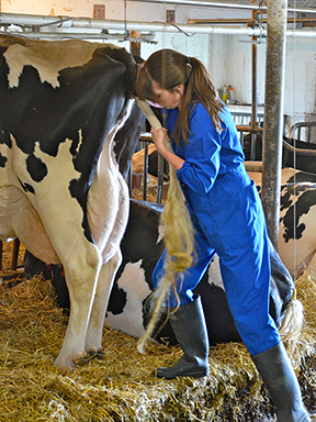 Palpation Takes Time And Practice Ontario Veterinary